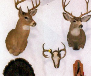 Deer mounts on display at Wild Game dinner