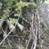 Lions-firewood