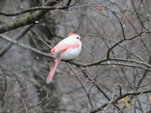 Mysterbird